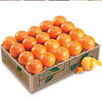 Petite Sweet Holiday Tangerines